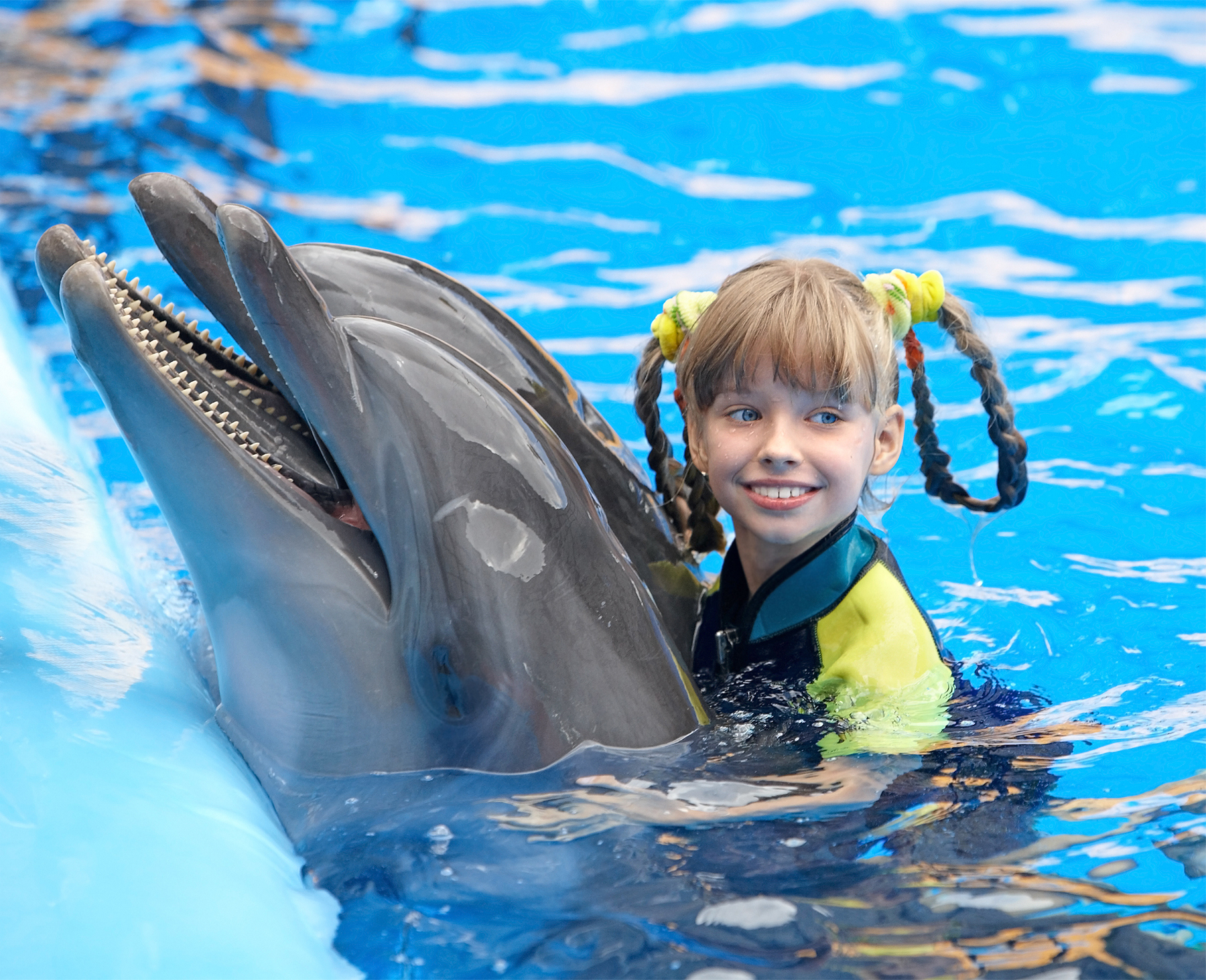 are we making the case for a ban on swimming with dolphins little